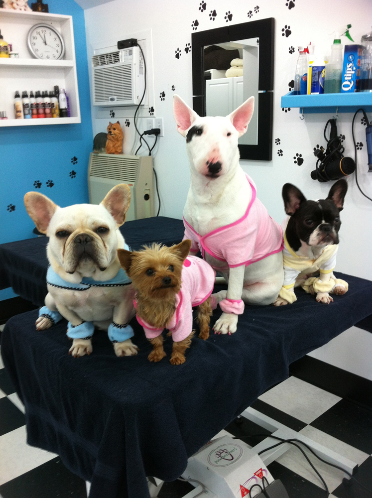 Dog Grooming Cobourg Ontario
