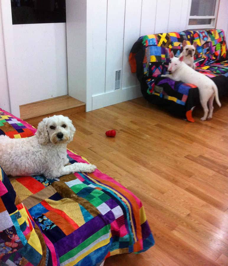 Dog Grooming Cobourg Area